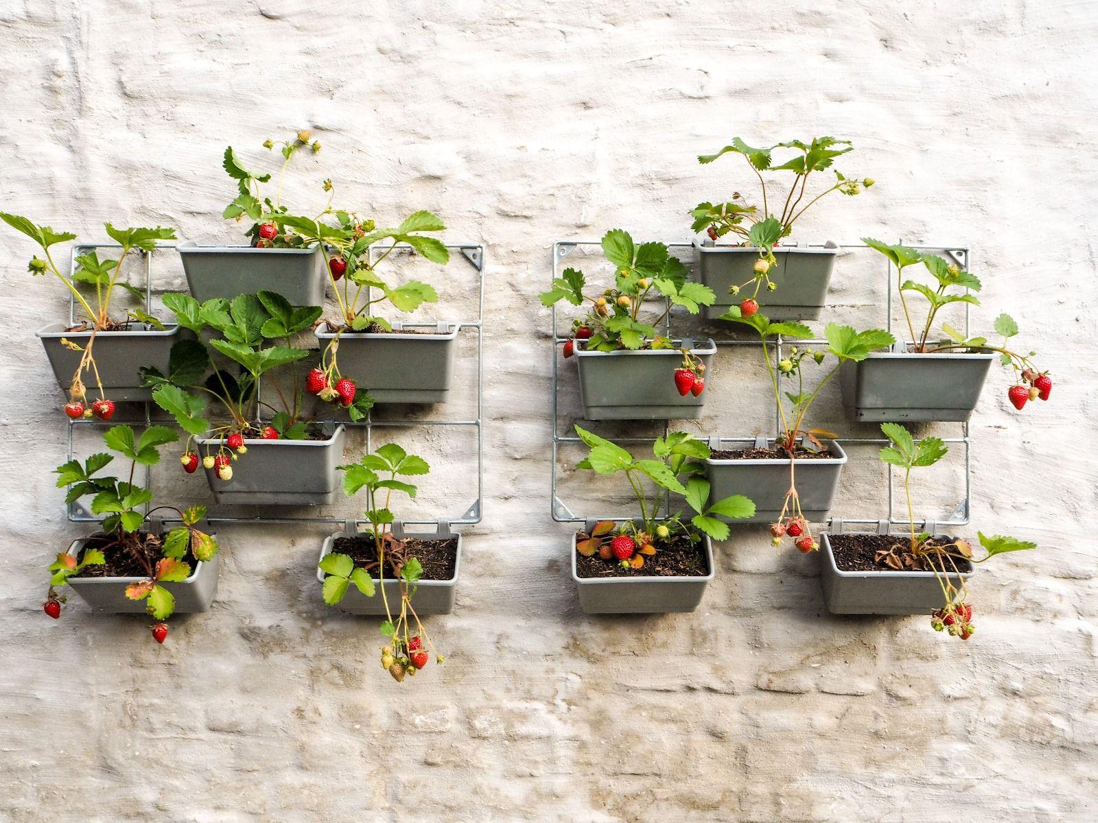 Tuintrend moestuin aan de muur